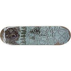 Дека для скейтборда Nord Медведь Multi 32.5 x 8.5 (21.6 см)